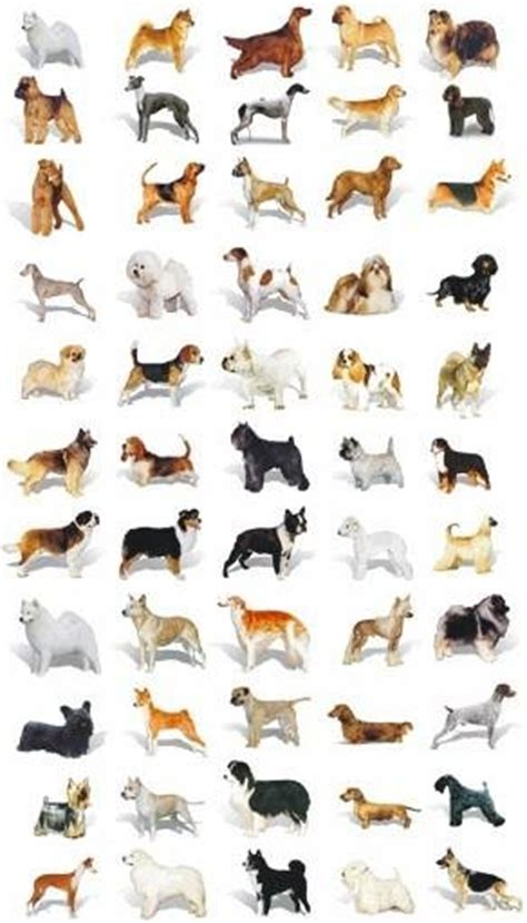 all kinds of dogs all kinds of dogs and puppies breeds picture