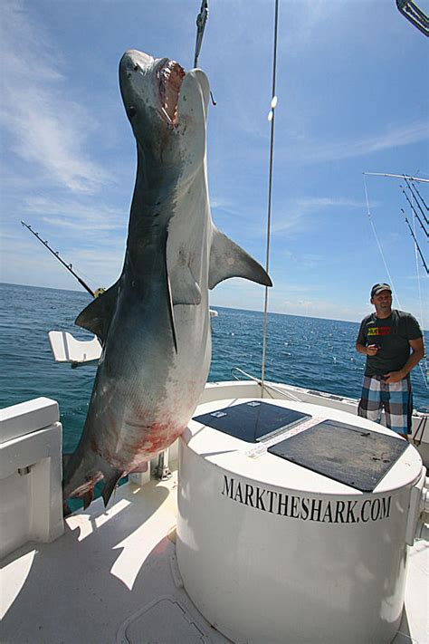 jaws 2 charter boat international fishing news usa florida massive tiger