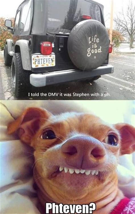 Stephen Dog Meme - phteven dog yes memes