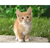 Cat  Descargar Gratis Free MP3 Download