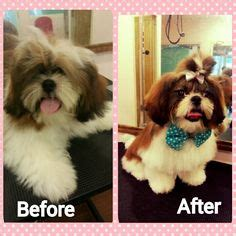 before and after cat haircuts 1000 images about before n after grooming on pinterest