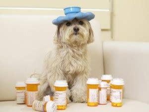 ibuprofen dogs los riesgos de automedicar a mi mascota argos veterinaria