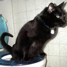 i think toilet training a cat is a bad idea � who�s with
