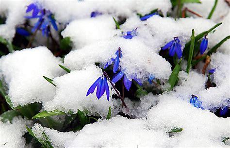Blumen Im April by April April Der Wei 223 Nicht Was Er Will Mal Regen Mal