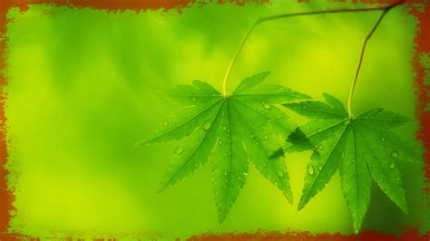 imagenes jpg para fondo de pantalla fotos para fondo de pantalla pc sobre plantas imagenes