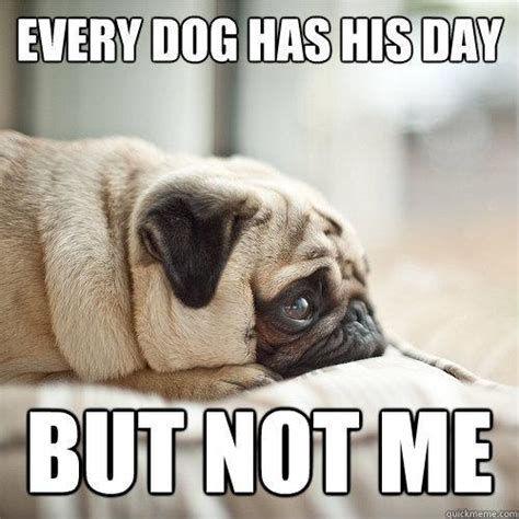 every dogs day every has his day picture quotes