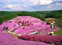 Hokkaido Japan Spring Flowers