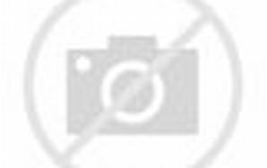 Foto Ular Naga di Mahakam Ulu Kutai Barat