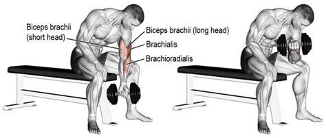 preacher bench concentration curls get bigger biceps with this bicep crushing workout