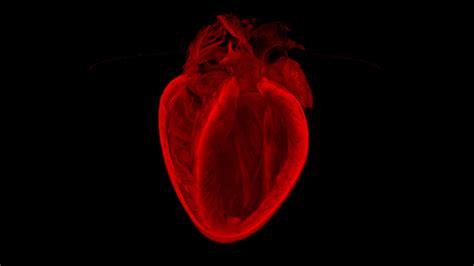 imagenes de corazones mas bonitos del mundo imagenes de corazones reales imagui