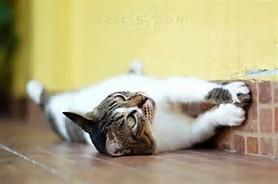 wallpaper kucing. wallpaper wallpaper kucing