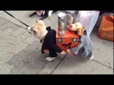 costume carrying present two dogs carrying present sf giants world series trophies
