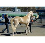 The 8 Most Beautiful And Rare Horses In World