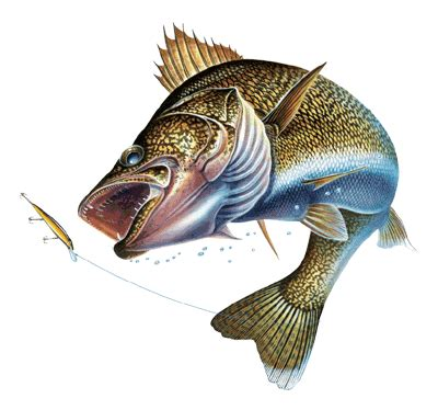 walleye lures things to think about while wishing for