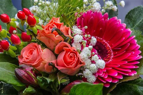 Flowers Bloom by Photo Gratuite Bouquet Rose Gerbera Rouge Image