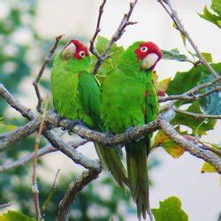 Parrots Of Telegraph Hill the parrots of telegraph hill 70 photos 108 reviews