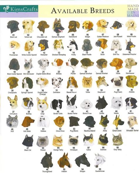 all kinds of dogs all breeds with names and pictures
