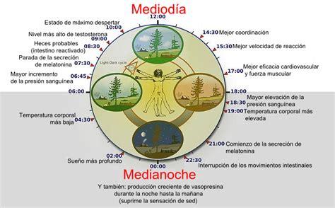 cortisol wikipedia la enciclopedia libre ritmo circadiano wikipedia la enciclopedia libre
