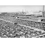Livestock Chicago 1947jpg  Wikipedia The Free Encyclopedia