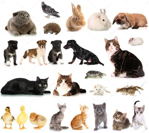 pictures of pets collage of different animals stock photo