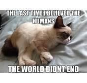 25 Hilarious Grumpy Cat Memes For Your Friday Photos