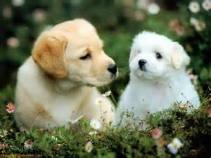 puppies wallpapers are the latest and best wallpapers for dog lovers