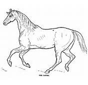 Desenho De Cavalo Para Colorir E Pintar  Rei Dos Anime