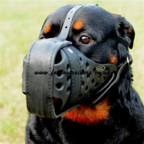 k9 rottweiler k9 dogs muzzle for rottweiler attack and agitation