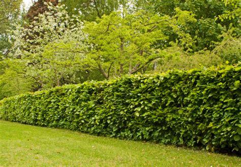 sichtschutz garten langlebig zaun oder hecke grundlagen sichtschutz obi ratgeber