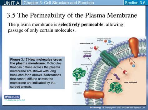 biology  plasma membrane permeability section