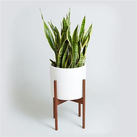 in door plant put in pot vide 25 best ideas about snake plant on pinterest indoor