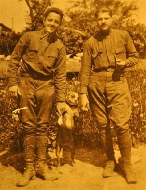 History Sergeant Stubby Sergeant Stubby Will Change The Way You Look At Your