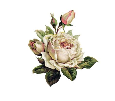 english rose tattoo 17 of 2017 s best vintage tattoos ideas on