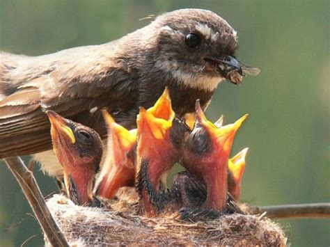 mama birds feeding baby birds 8 heart warming photos bit rebels