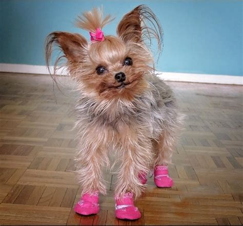 tiny puppy small boots for tiny breeds
