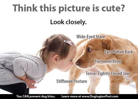 puppy language language of dogs for lies