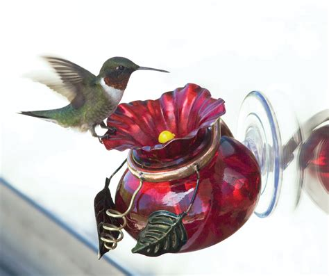 related keywords suggestions for hummingbird feeders window