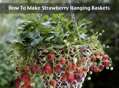 how to make strawberry hanging baskets homestead survival