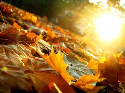 fallen leaves film pin by inspirationfeed on photography pinterest