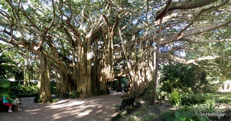 16 of the most magnificent trees in the world bored panda 16 of the most magnificent trees in the world pics