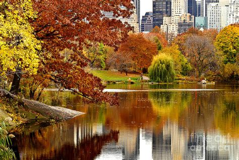 nyc color autumn colors in central park new york city photograph by