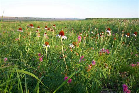 flowering prairie plants books file kirwin prairie flowers 7468776398 jpg wikimedia