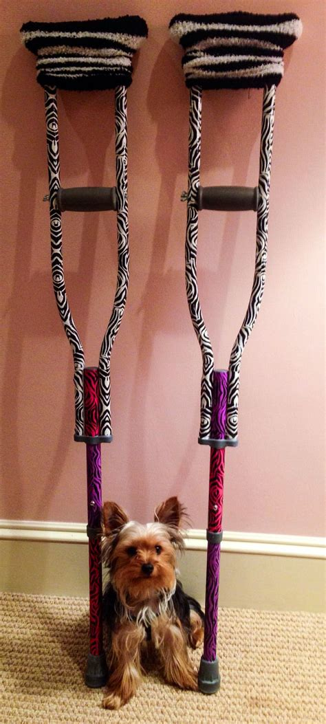 yorkie knee surgery quot tween zebra duct crutches quot and our sweet yorkie crafts for crutches