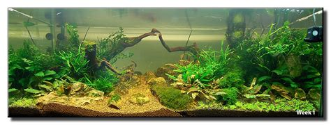 aquascaping inspiration aquascape of the month may 2008 quot my homeland