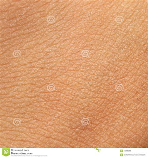 human skin texture stock image image of micro macro 26409147 human skin texture stock photo image of micro 59256368