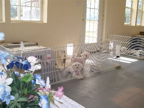 Maltese Room by About Us And Our Maltese Dogs Maltese Puppies