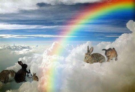 merry christmas    loved missed bunnies  rainbow bridge dp rainbow bridge