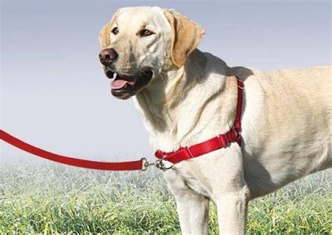 equipamiento obligatorio para entrenar en equipo de adiestramiento canino