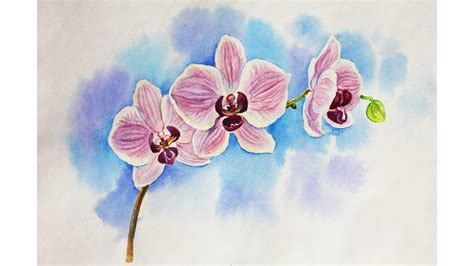 drawing drawing drawing lessons how to draw an orchid whatercolour