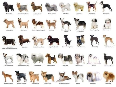 different puppy breeds why do dogs of different breeds look so different while humans all around the world